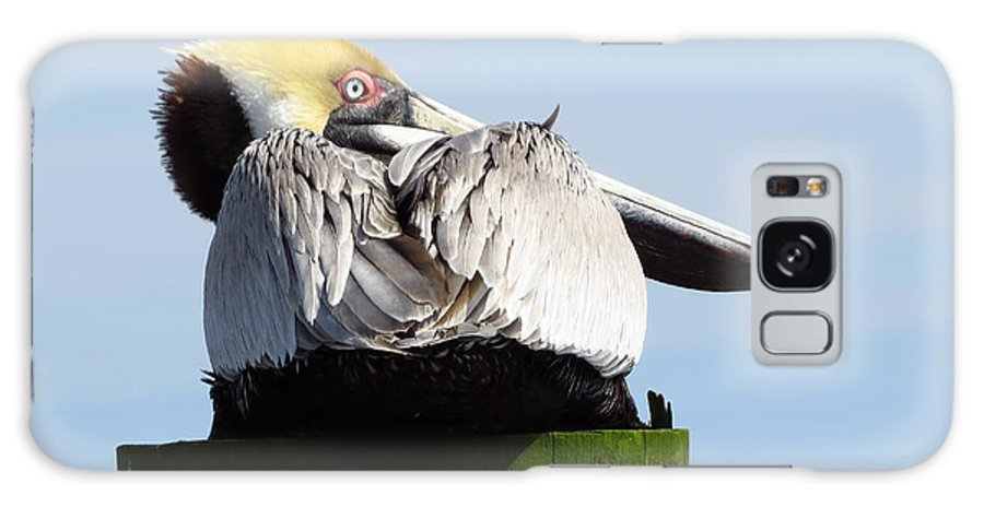 Bird Galaxy S8 Case featuring the photograph Rear View Pelican by Phyllis Beiser