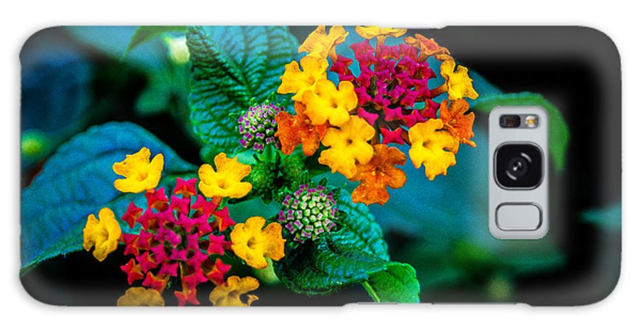 Flower Galaxy S8 Case featuring the photograph Red And Yellow Flowers by Jason Picard