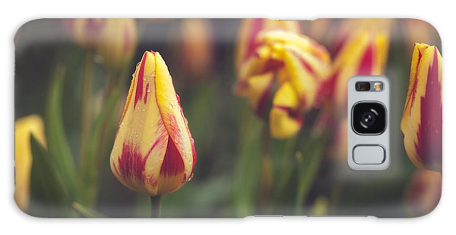 Tulips Galaxy S8 Case featuring the photograph Red And Yellow Tulips by Mary Smyth