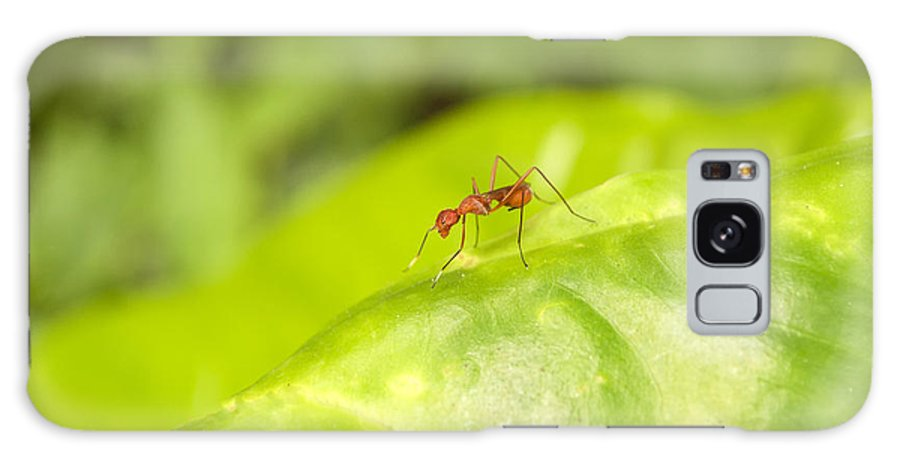 Macro Galaxy S8 Case featuring the photograph Red Ant On Green Leaf by Rudra Narayan Mitra