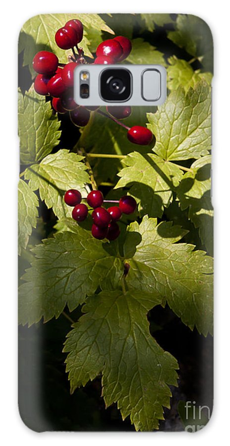 Berrry Galaxy S8 Case featuring the photograph Red Baneberry  #8955 by J L Woody Wooden