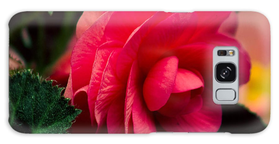 Flower Galaxy S8 Case featuring the photograph Red Begonia by Ron Roberts