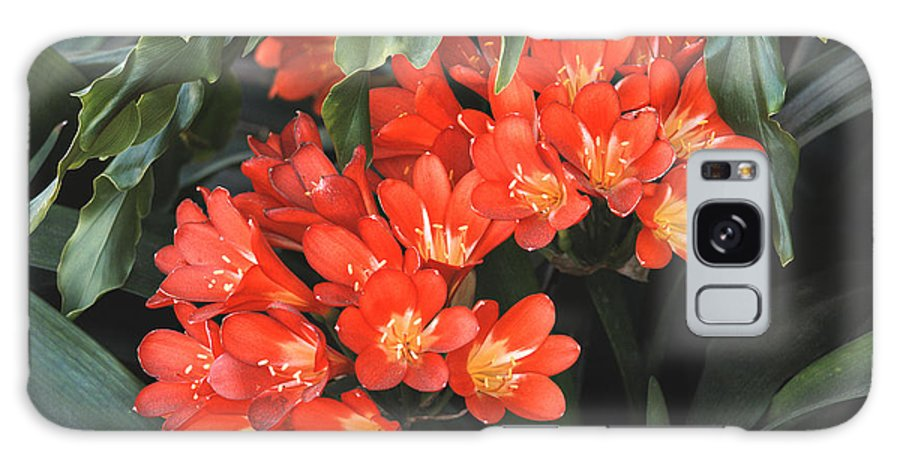 Red Galaxy S8 Case featuring the photograph Red Blossoms At Lax by Deborah Smolinske