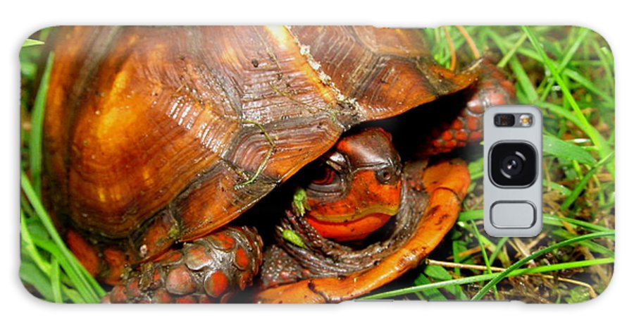 Red Box Turtle Red Reptiles Red Turtles North American Turtles Eastern Box Turtles Appalachian Reptiles Appalachian Turtles Pennsylvania Box Turtle Forest Creatures Nature Prints Preserve Biodiversity Natural Design Herpetology Rare Creatures Of The Forest Beings Natural Design Exotic Nature Conservancy Fine Art Awesome Images Perfect Prints Smiling Turtle Grin Red Tortoise North American Turtles Of Appalachia Biodiversity Cute Critters Cute Animals Sierra Club Green Peace Pa Parks Galaxy S8 Case featuring the photograph Red Box by Joshua Bales