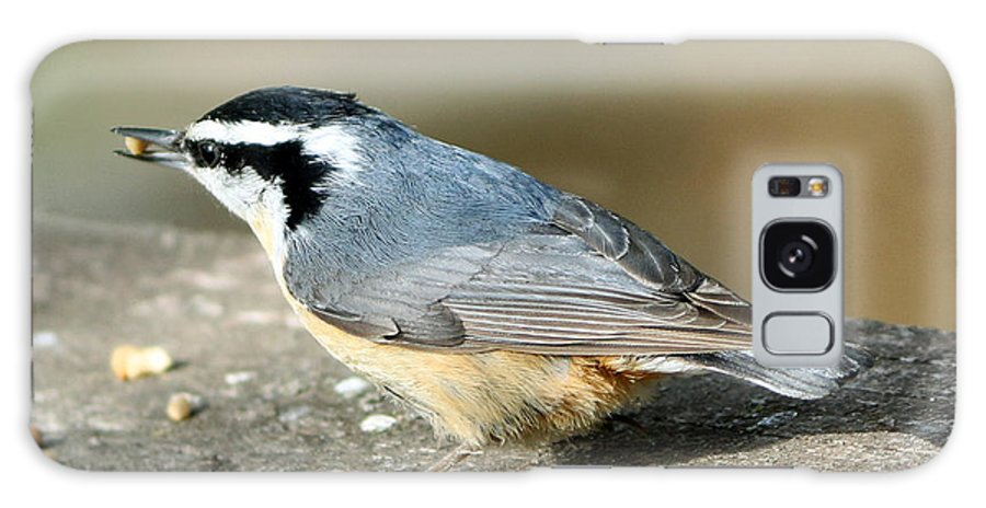 Red-breasted Nuthatch Galaxy S8 Case featuring the photograph Red-breasted Nuthatch by Lori Tordsen