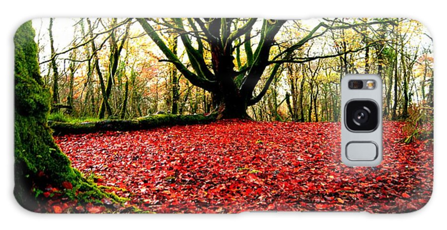 Red Carpet Autumn Leaves Rust Trees Forest Galaxy S8 Case featuring the photograph Red Carpet by John Murphy