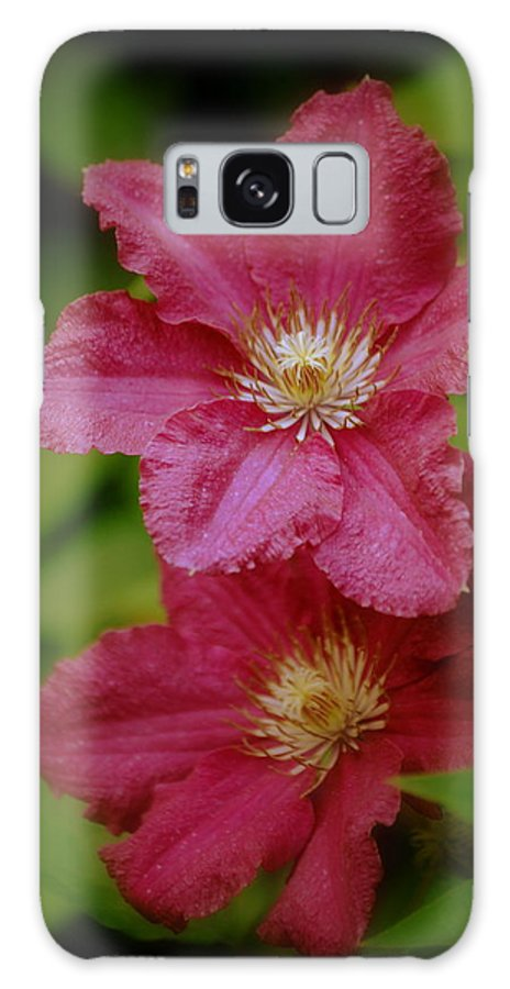 Flower Galaxy S8 Case featuring the photograph Red Clematis Flowers by Nathan Abbott