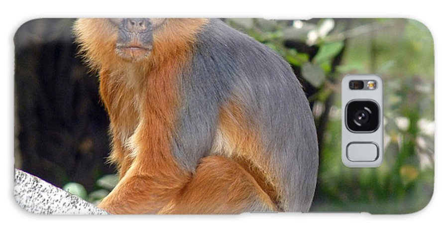 Red Colobus Monkey Galaxy S8 Case featuring the photograph Red Colobus Monkey by Tony Murtagh