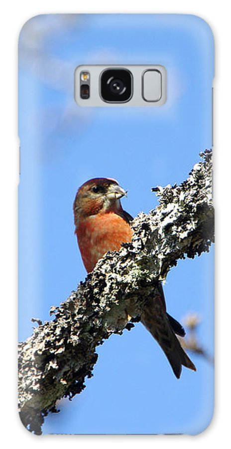 Bird Galaxy S8 Case featuring the photograph Red Crossbill Finch by Marilyn Wilson
