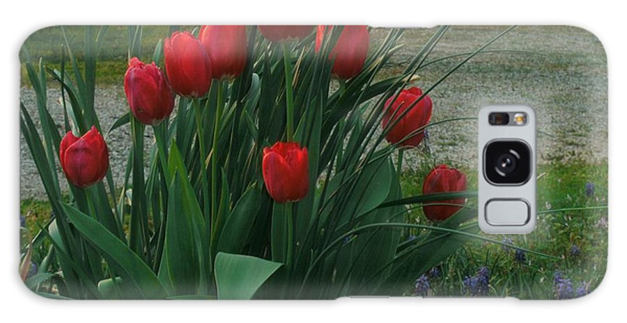Red Dynasty Red Tulips Galaxy S8 Case featuring the photograph Red Dynasty Red Tulips by Kip DeVore