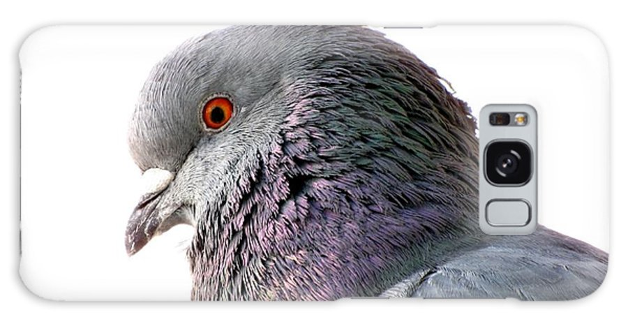 Pigeon Galaxy S8 Case featuring the photograph Red-eyed Pigeon by Jennifer Wheatley Wolf