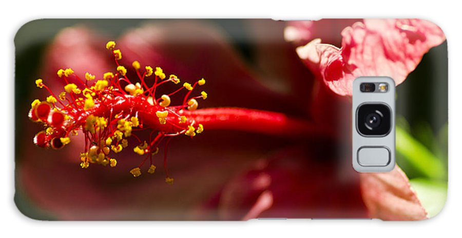 Red Galaxy S8 Case featuring the photograph Red Flower by Vincent Billotto