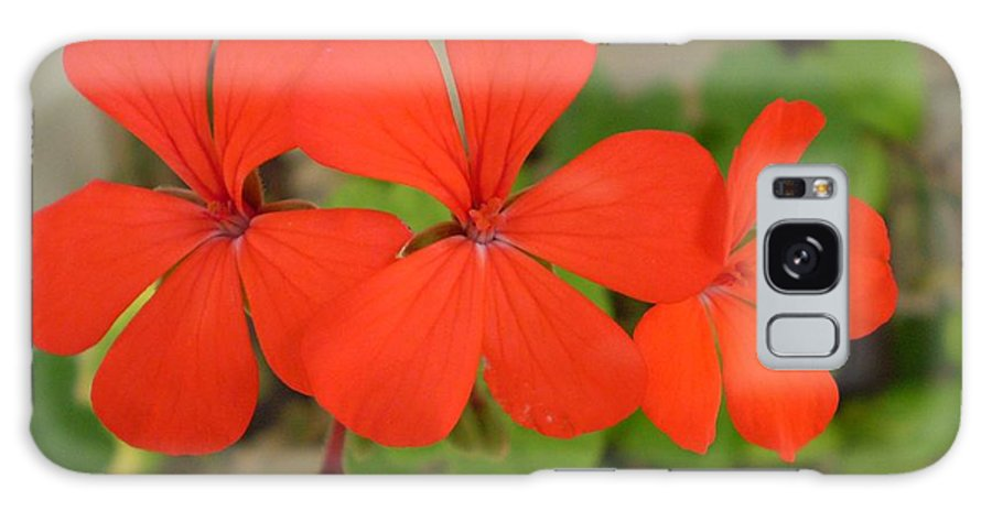 Flower Galaxy S8 Case featuring the photograph Red Flowers by Florentina De Carvalho