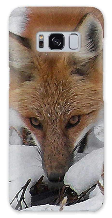 Animals Galaxy S8 Case featuring the digital art Red Fox Upclose by Ernie Echols