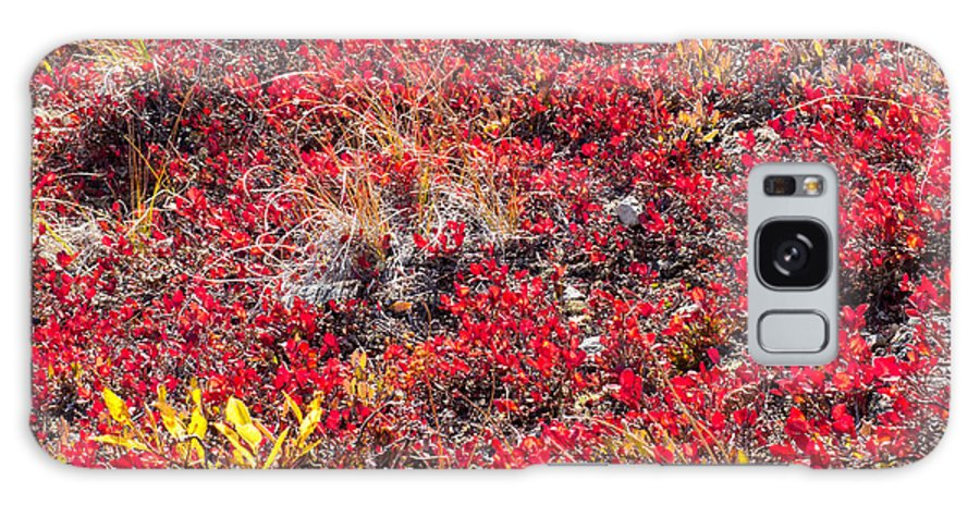 arctostaphylos Alpina Galaxy S8 Case featuring the photograph Red-golden Alpine Vegetation Background by Stephan Pietzko