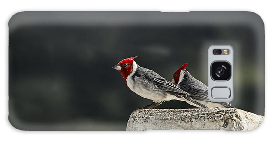 Red Crested Cardinals Galaxy S8 Case featuring the photograph Red Heads by Douglas Barnard