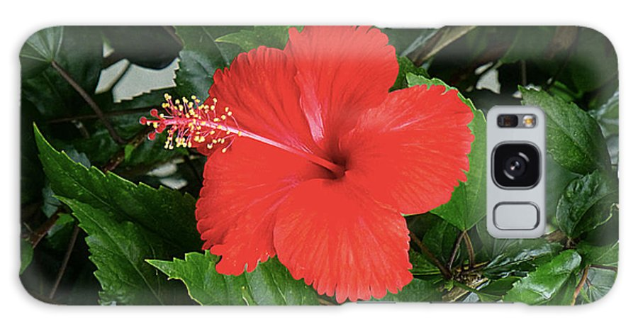 Red Galaxy S8 Case featuring the photograph Red Hibiscus by Girish J