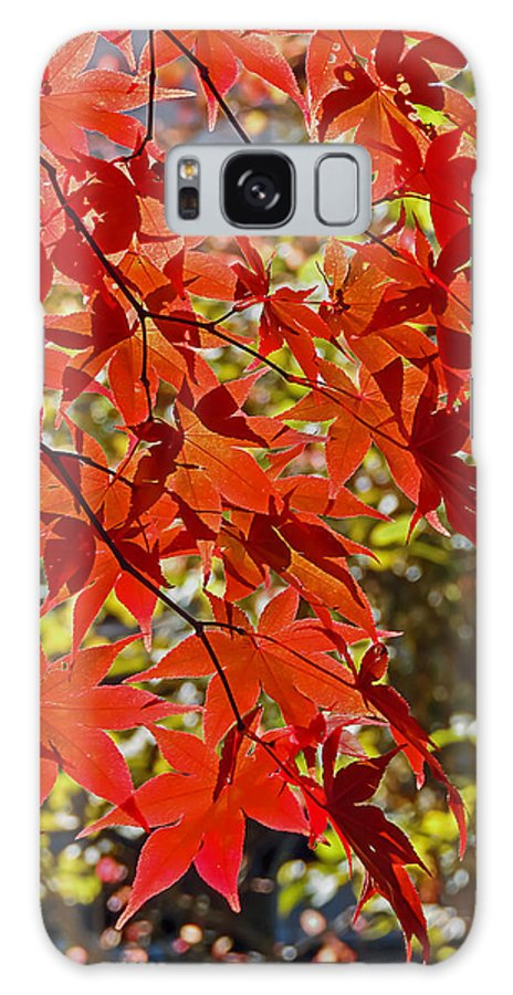 Nature Galaxy S8 Case featuring the photograph Red Leaves 1 by Robert Mitchell