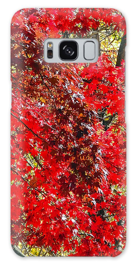 Nature Galaxy S8 Case featuring the photograph Red Leaves 3 by Robert Mitchell