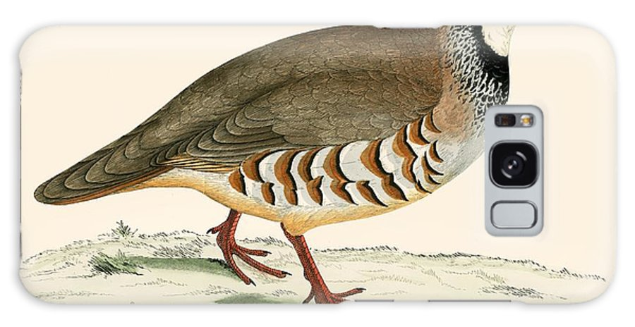 Birds Galaxy S8 Case featuring the painting Red Legged Partridge by Beverley R Morris
