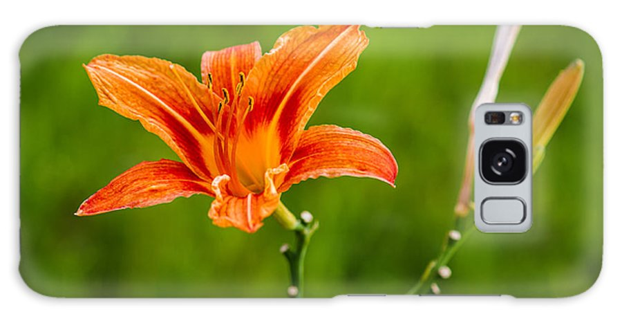 Anniversary Galaxy S8 Case featuring the photograph Red Lily - Featured 3 by Alexander Senin