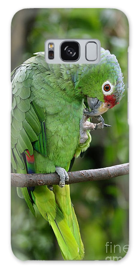 Parrot Galaxy S8 Case featuring the photograph Red-lored Parrot by Rosemary Calvert