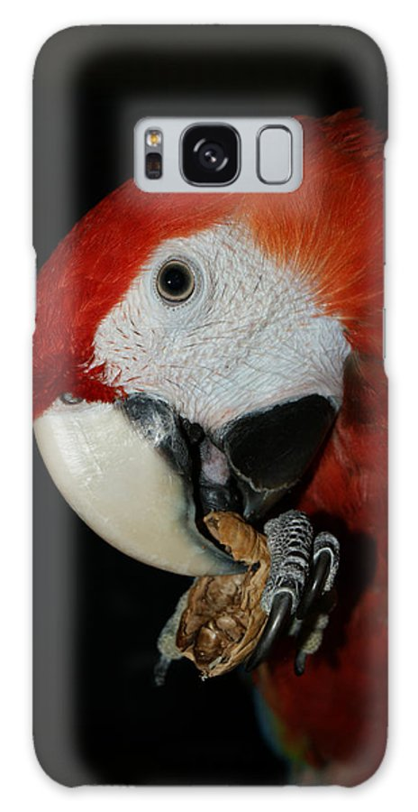 Red Macaw Galaxy S8 Case featuring the photograph Red Macaw by Ernie Echols
