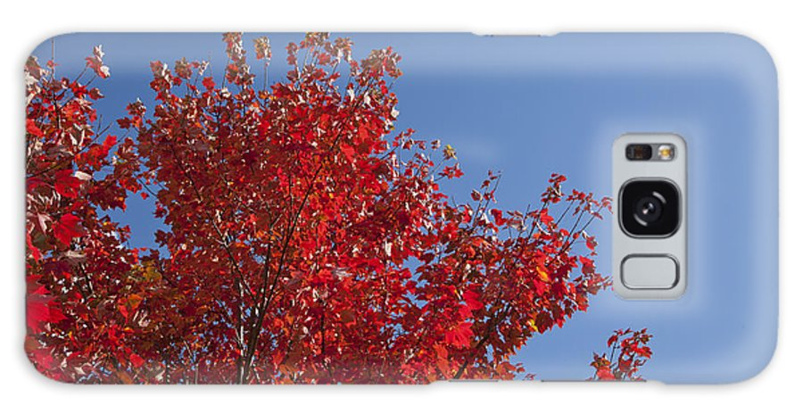 Red Galaxy S8 Case featuring the photograph Red Maple Leaves by Jonathan Welch