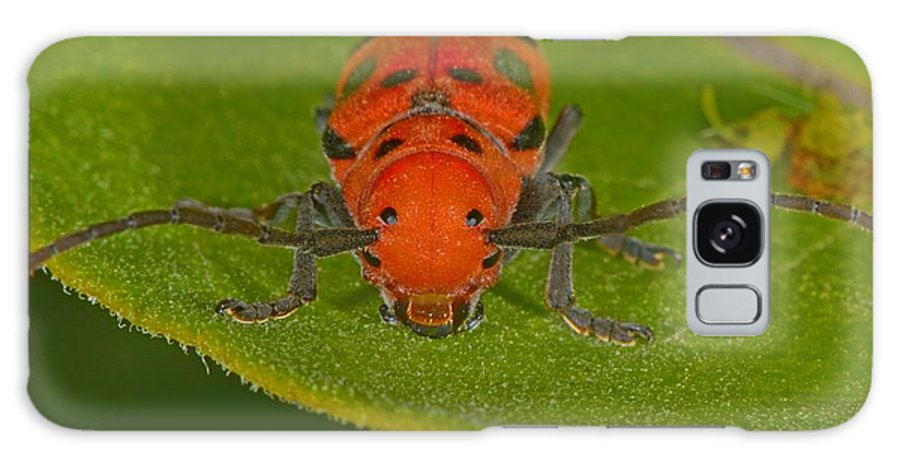 Tetraopes Tetrophthalmus Galaxy S8 Case featuring the photograph Red Milkweed Beetle by Tony Beck