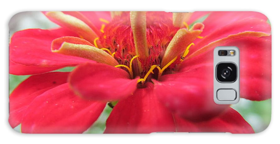 Flowers Galaxy S8 Case featuring the photograph Red Mini-zinnia by Tina M Wenger