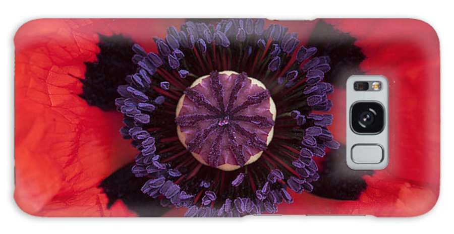 Papaver Orientale Galaxy S8 Case featuring the photograph Red Papaver Orientale by Tim Gainey