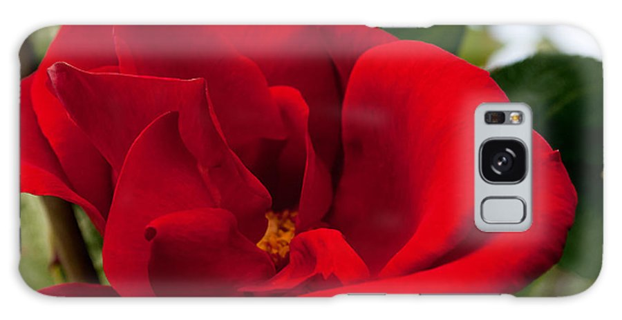 Red Rose Galaxy S8 Case featuring the photograph Red Passion by Tikvah's Hope