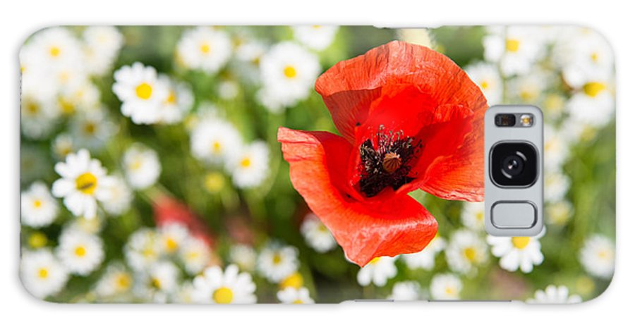 Poppy Galaxy S8 Case featuring the photograph Red Poppy With Daisies On Flower Meadow by Matthias Hauser