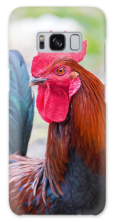 Rooster Galaxy S8 Case featuring the photograph Red Rooster by Nicholas Blackwell
