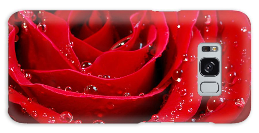 Red Galaxy S8 Case featuring the photograph Red Rose by Elena Elisseeva