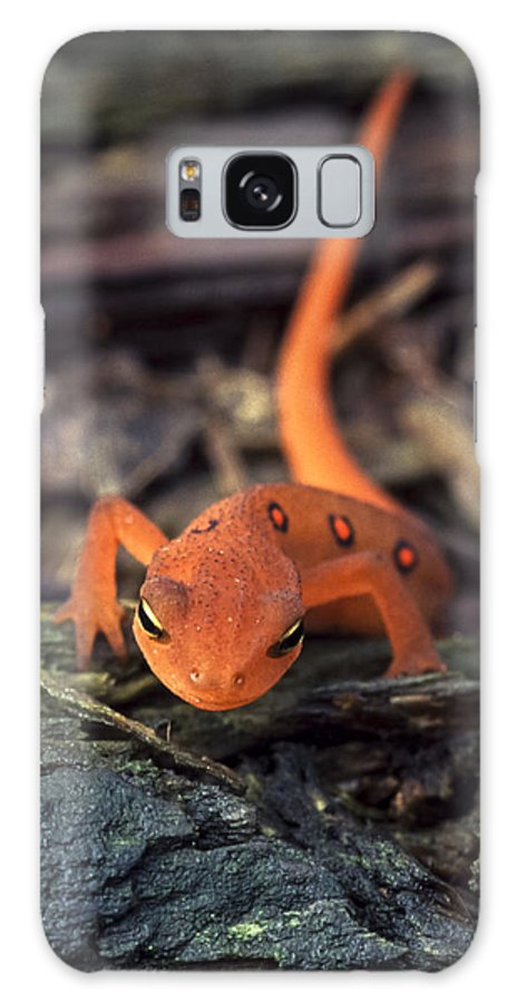 Red Galaxy S8 Case featuring the photograph Red Spotted Newt by Richard Kitchen