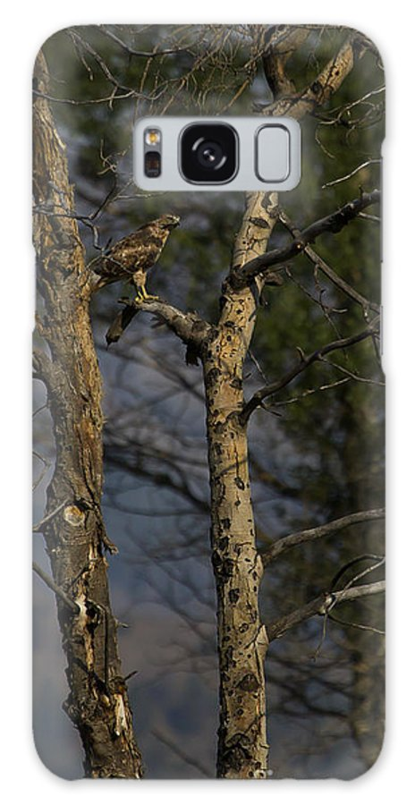 Hawk Galaxy S8 Case featuring the photograph Red-tail Hawk  #0596 by J L Woody Wooden