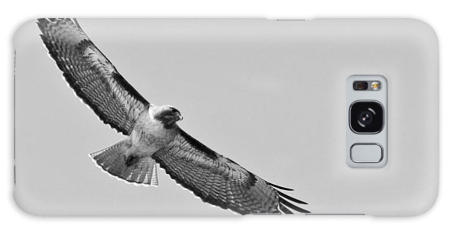 Galaxy S8 Case featuring the photograph Red Tail Monochrome by Lee Bertrand