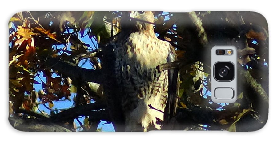 Galaxy S8 Case featuring the photograph Red Tailed Hawk In Tree by Kandids By Katy