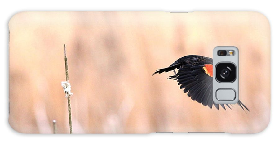 Flying Galaxy S8 Case featuring the photograph Red-wing Blackbird In Flight by Travis Truelove