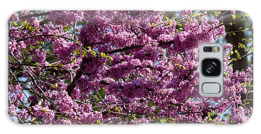 Tree Galaxy S8 Case featuring the photograph Redbud Tree In Blossom by Thomas Firak