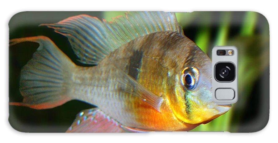 Fish Galaxy S8 Case featuring the digital art Redmouth Chichlid by Wernher Krutein