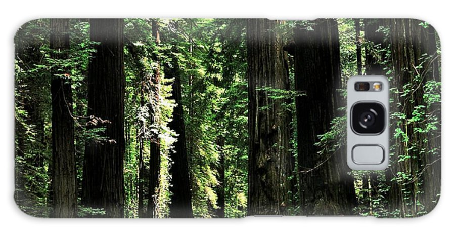 California Galaxy S8 Case featuring the photograph Redwood Highway by Benjamin Yeager
