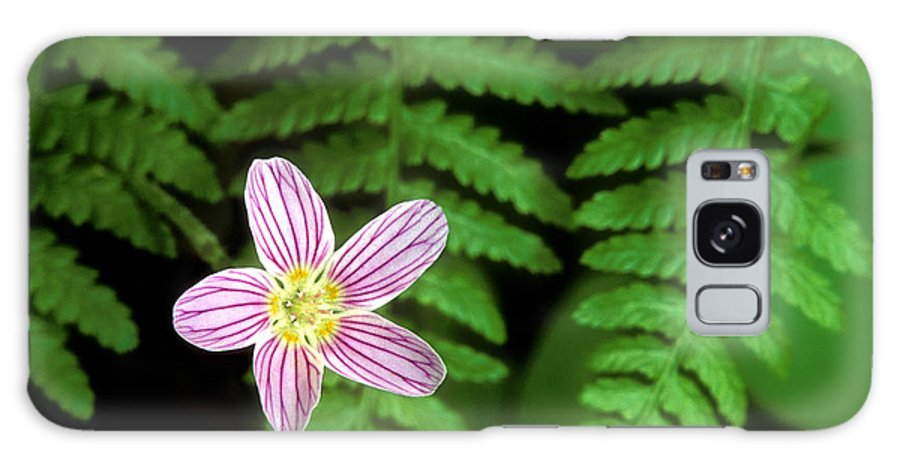 Redwood Sorrel Galaxy S8 Case featuring the photograph Redwood Sorrel Wildflower Nestled In Ferns by Dave Welling