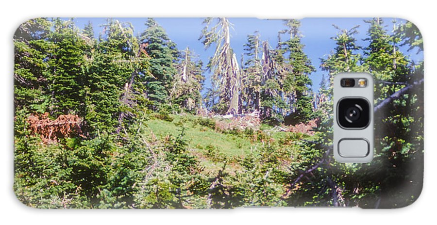 Olympic National Park Washington Parks Tree Trees Forest Forests Nature Landscape Landscapes Galaxy S8 Case featuring the photograph Reforestation by Bob Phillips