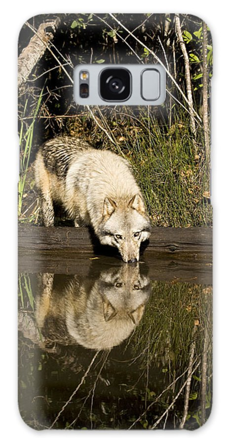 Wolf Galaxy S8 Case featuring the photograph Refreshment by Jack Milchanowski