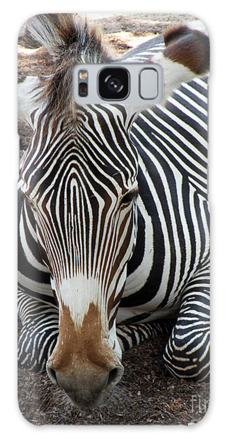 Zebra Galaxy S8 Case featuring the photograph Relaxing Zebra by Jillyin Calhoun