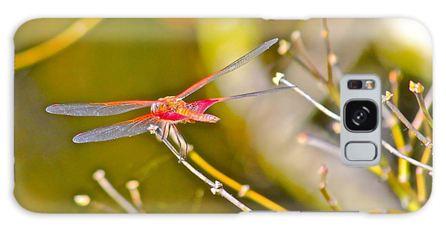 Nature Galaxy S8 Case featuring the photograph Resting Red Dragonfly by Cyril Maza