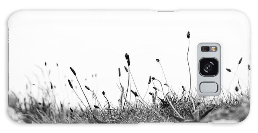 2012 Galaxy S8 Case featuring the photograph Ribwort Plantain by Anne Gilbert