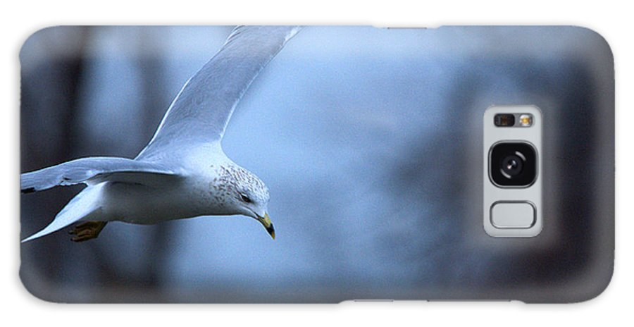 Bird Galaxy S8 Case featuring the photograph Ring-billed Gull Gliding Portraits 1 by Roy Williams